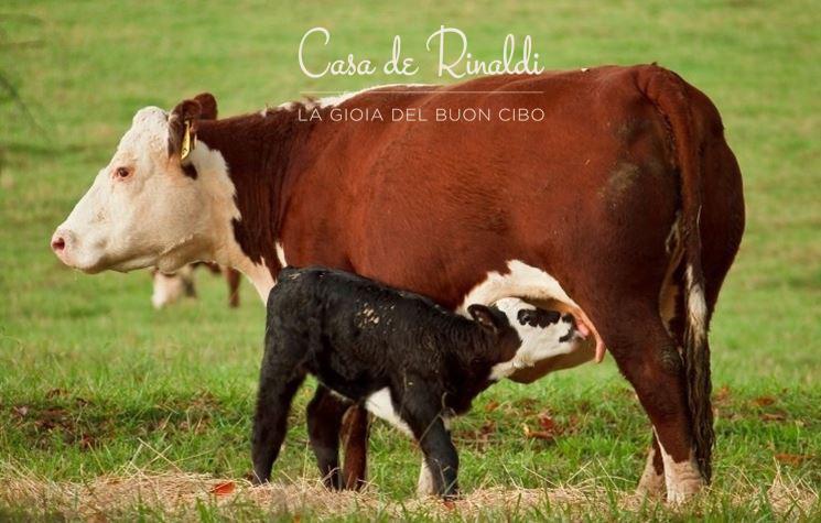 Casa De Rinaldi - Cos'è e perchè preferiamo il latte nobile?